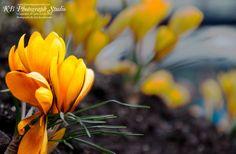 Photographer: Kyle Buschkewitz Website: www.kbphotographstudio.com