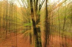 Nieuw in mijn Werk aan de Muur shop: Herfstexplosie in het bos