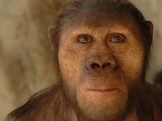 "A hyper realistic reconstruction of an Australopithecus africanus based on cast of the skull STS5 (nicknamed ""Mrs Ples"") discovered in 1947 ..."