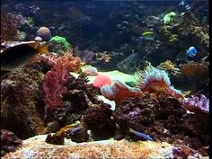 ▶ Relaxation Aquarium Anémones et Poissons Musique Relaxante - YouTube