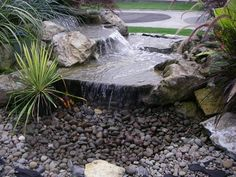 Little Pondless Waterfall... So for the Taro Lo'i... Safe for the kids but still moving water...