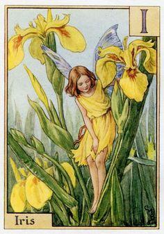 Iris Alphabet Letter I Flower Fairy Vintage Print, c.1940 Cicely Mary Barker Book Plate Illustration