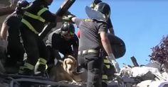 Vendredi dernier, un chien a été arraché vivant des décombres d'Amatrice (Italie). Une bonne nouvelle qui arriverait presque à nous faire oublier la tragédie qui a touché la ville…