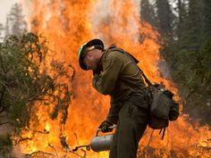 A firefighter battles the Trinity Ridge Fire in the Boise National Forest near Featherville, Idaho, in this U.S. Forest Service handout photo dated August 19, 2012. A new study says man-made climate change has expanded forest fires in this state and across the western U.S. Photo by Kari Greer/REUTERS/US Forest Service/Handout