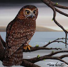 New Zealand Morepork Owl - Tania Verrent Drawing Birds, Bird Drawings, Owl Bird, Bird Tree, Gallery Walls, Art Gallery, Polynesian People, Nz Art, Kiwiana