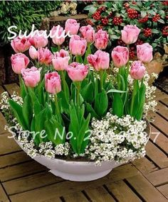 Big Sale!100% true 2 bulbs pink tulip bulb, tulip flower(not tulip seed),flower bulb symbolizes love fragrant diy home garden pl