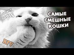 Самые смешные кошки #14 ∙ Приколы с животными 2015 ∙ Best Funny Cats Com...