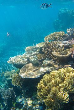 Colorful corals and fishes at Agincourt Reef, Great Barrier Reef, Australia.
