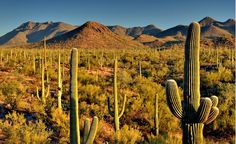 Saguaro National Park is located in southeast Arizona, on the east and west sides of Tucson, Arizona