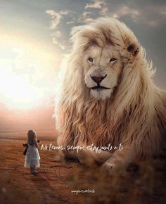 I feel like oversized aren't so cool anymore. Thats why I am going to share my oversized animal designs. Lion Images, Lion Pictures, Jesus Pictures, Lion Wallpaper, Nature Wallpaper, Narnia, Lion Of Judah Jesus, Animals Beautiful, Cute Animals