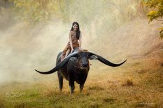 Handsome Thai buffalo by SaravutWhanset