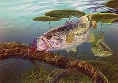 pig hawg log largemouth bass print