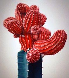 Cactussen in je interieur zijn HOT! Groepeer ze op een leuk kastje of tafeltje en je hebt een leuke eyecatcher