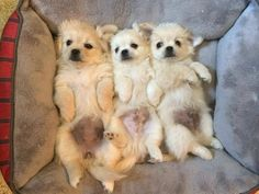 But it's scientifically impossible to NOT be in the mood for puppy bellies…so here are three of them. | 31 Adorable Pictures For Anyone Who Is Really Stressed