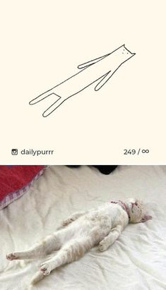 50 Times 'Stupid Cat Drawings' Made Everyone Laugh With How Accurate They We. - Stupid Ca. Dumb Cats, Stupid Cat, Funny Cats, Funny Animals, Cute Animals, Funny Cat Videos, Funny Cat Pictures, Animal Pictures, Simons Cat