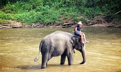 Maetaman Elephant Camp, Chiang Mai – Half a day with the gentlest of giants