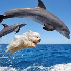 This dog must think he is a dolphin!