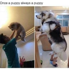 "Dirty dance me: | 27 Hilarious Photos That Will Make You Shout, ""I LOVE DOGS, I LOVE THEM SO MUCH"""