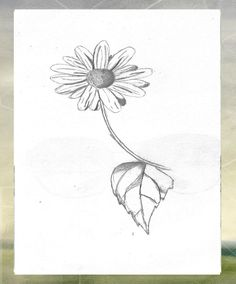 flower sketches - Google Search