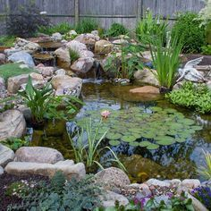 Did You Know? Two-thirds of a pond's surface should be covered with plants, like lily pads. Plants shield the water from sun, lessening algae growth, and provides a cover for fish to hide from predators.
