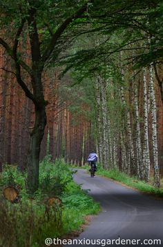 Cycling in the Spreewald