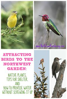 Attracting birds to the Pacific Northwest garden - which northwest native plants attract which birds? Find out here. Kat Morris Realtor Your Property Matters LLC Hummingbird Plants, Bird House Kits, Patio Plants, Garden Plants, Flowers Garden, How To Attract Birds, Nature Plants, Garden Signs, Backyard Birds
