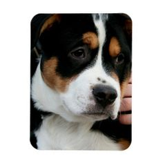 GREATER SWISS MOUNTAIN DOG PUPPY MAGNET