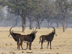 #zimbabwe #wilderness #wildlife