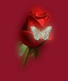 Gif Red rose & butterfly