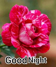 Good Night Images For Whatsapp New Good Night Images, Good Morning Beautiful Pictures, Good Night I Love You, Good Night Prayer, Good Night Sweet Dreams, Good Morning Picture, Good Morning Good Night, Good Morning Images, Good Night Greetings