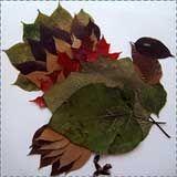 fall leaves turkey craft Turkey Crafts for Kids