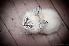 Blue Eyed by Holly Sisson on 500px