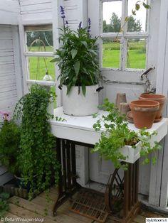 kasvihuone,piharakennus,ruukkukasvi,kasvit,huvimaja,istutukset,istutuspöytä,ruukkukasvit,ruukutuspöytä,ruukutuspaikka