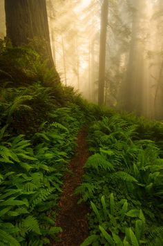 Del Norte Coast Redwoods State Park, California, Jeff Swanson