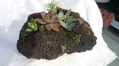 Succulent lava rock planter