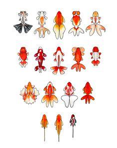 20 Types of Goldfish for Aquarium (Oranda, Shubunkin, Bubble Eye, Etc) Koi Art, Fish Art, Fish Drawings, Art Drawings, Koi Fish Drawing, Goldfish Tattoo, Carpe Koi, Shrink Art, Tropical Fish