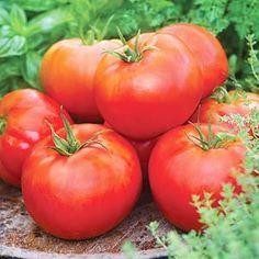 BHG ultimate veggie growing guide