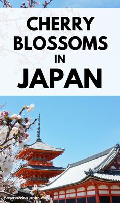 japan travel tips. japan things to do. cherry blossoms in kyoto itinerary. beautiful world travel destinations and places to visit in japan. best things to do. outdoor travel tips. Winter In Japan, Japan Spring, Japan Travel Tips, Asia Travel, Solo Travel, Cherry Blossom Japan, Cherry Blossoms, Kyoto Itinerary, Kyoto Japan