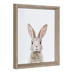 """Kate And Laurel 2-Piece Bunny 12.25"""" X 15.25"""" Framed Canvas Wall Art Set In Grey - This Kate and Laurel 2-Piece Bunny Framed Wall Art Set celebrates the beauty of wildlife with a cute look. This ready-to-hang digital framed photography features adorable front and back imagery of a bunny set against a crisp white background. - living room decor"""