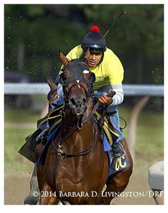 Tonalist working out this morning in preparation for the Travers (by Barbara Livingston).