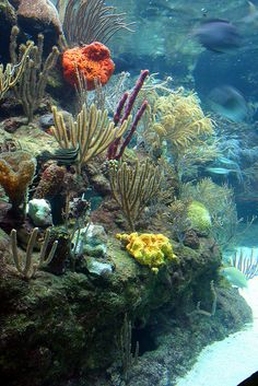 Coral Reef, Xcaret, Mexico. I'm going back to the Riviera Maya as soon as…