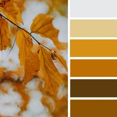 yellow mustard color palette #color #inspiration