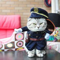 Funny Cat Clothes Pet Costume Nurse Policeman Suit For Cat Halloween Costume Pet Cat Clothes Uniform Hat Attire Suit 25S1Q