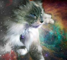 I appear to have gotten your attention with this majestic space cat that has nothing to do with RP. However, I do a have a question. Does anybody want to do a certain RP with me? You can be a guy or a girl. (I'd prefer a guy.) It's not romantic, and there is some fantasy involved. It's more action-ish. Any takers?