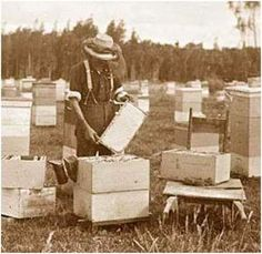 "ScientificBeekeeping.com - The Rules for Successful Beekeeping. Misconception #6—That ""Treatment Free"" is Good Husbandry"