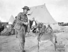 An Australian Soldier With the Small Syrian Donkey Which Was the Mascot of the Australian Light Horse Regiment -- Maadi, Egypt Ww1 History, Modern History, Military History, Ww1 Pictures, Ww1 Photos, Ww1 Soldiers, Wwi, Army Cats, War Horses