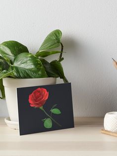 """Red rose"" Art Board Print by Geanina5698 