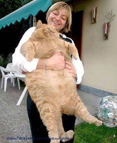 One of the fattest cat in the world!