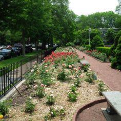 Evanston IL Rose Garden