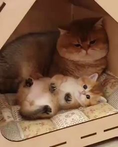 Baby with Daddy 💛💛 - stubentiger - Perros Kittens And Puppies, Cute Cats And Kittens, Baby Cats, I Love Cats, Kittens Cutest, Cute Cat Gif, Cute Funny Animals, Cute Baby Animals, Funny Cute